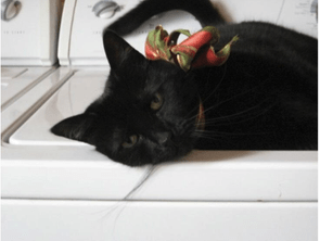 Black cat on laundry machine