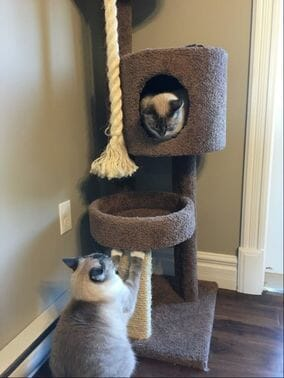 Two cats playing together on a play structure