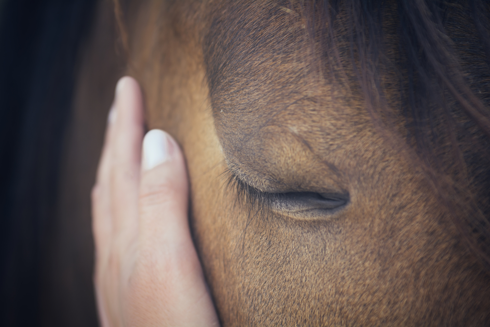 Female hand touching horse