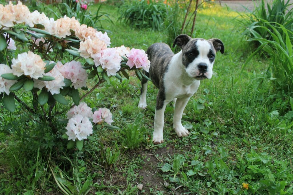 Pippy the puppy in a garden