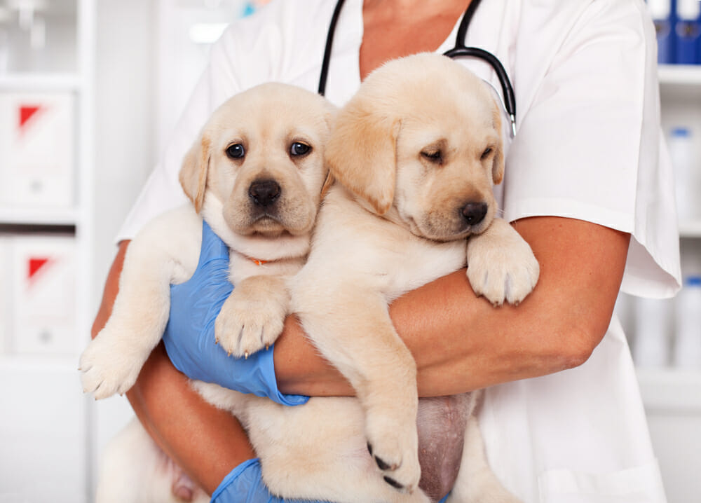 Vet Carrying Two Puppies